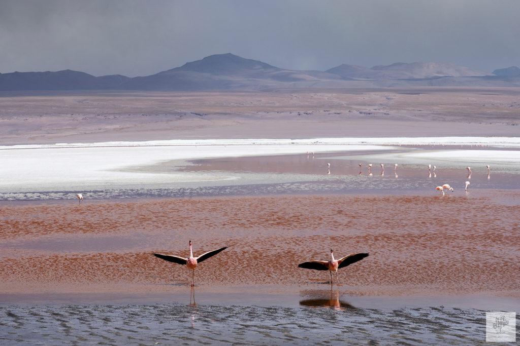 Bolivia Uyuni Elise Fournier travel Photographer